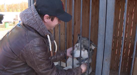 Футболисты «Урала» посетили приют для животных