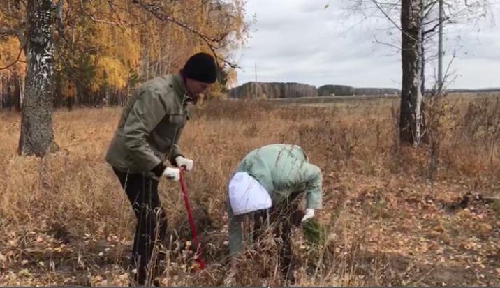 Зелёные насаждения восстанавливают волонтёры-экологи