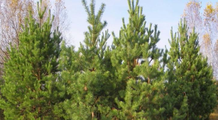 Программу по компенсационному озеленению запустили на севере области