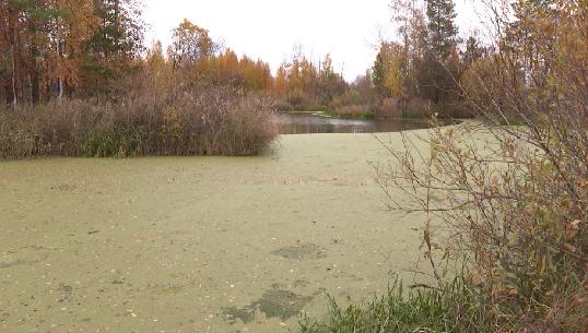 В реку Нейва идёт сброс канализационных стоков