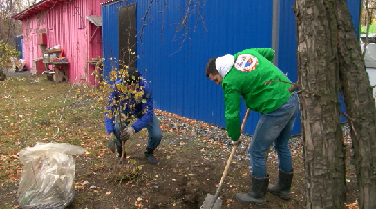 Возле первоуральского дома малютки высадили саженцы деревьев