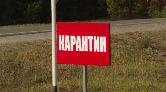 В Свердловской области выявлены новые очаги африканской чумы свиней