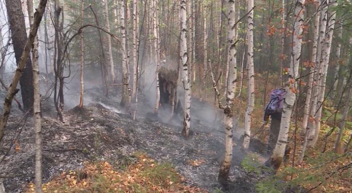 В Свердловскую область вернулись лесные пожары